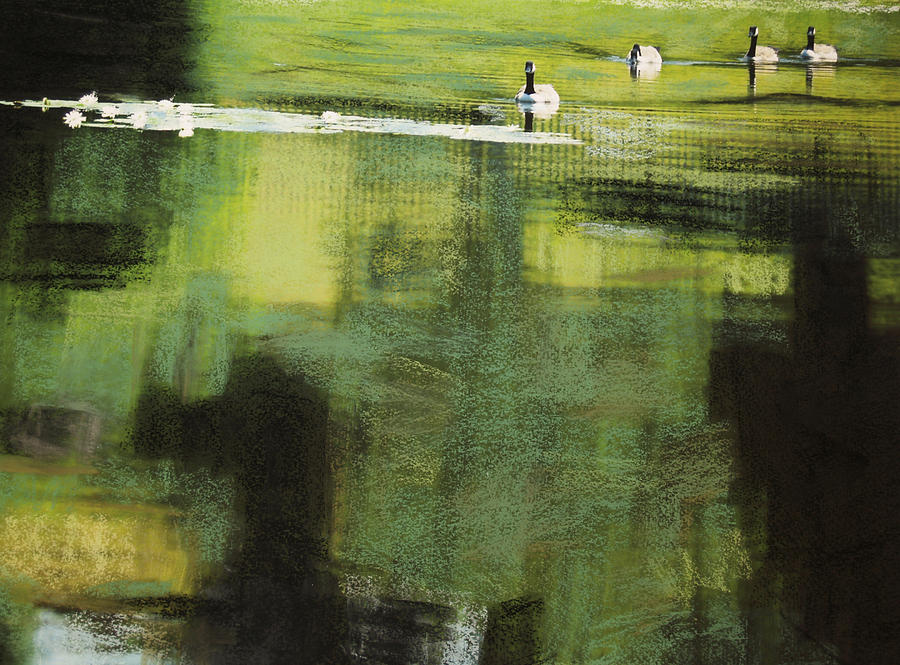 Geese Photograph - Geese On Pond by Andy Mars