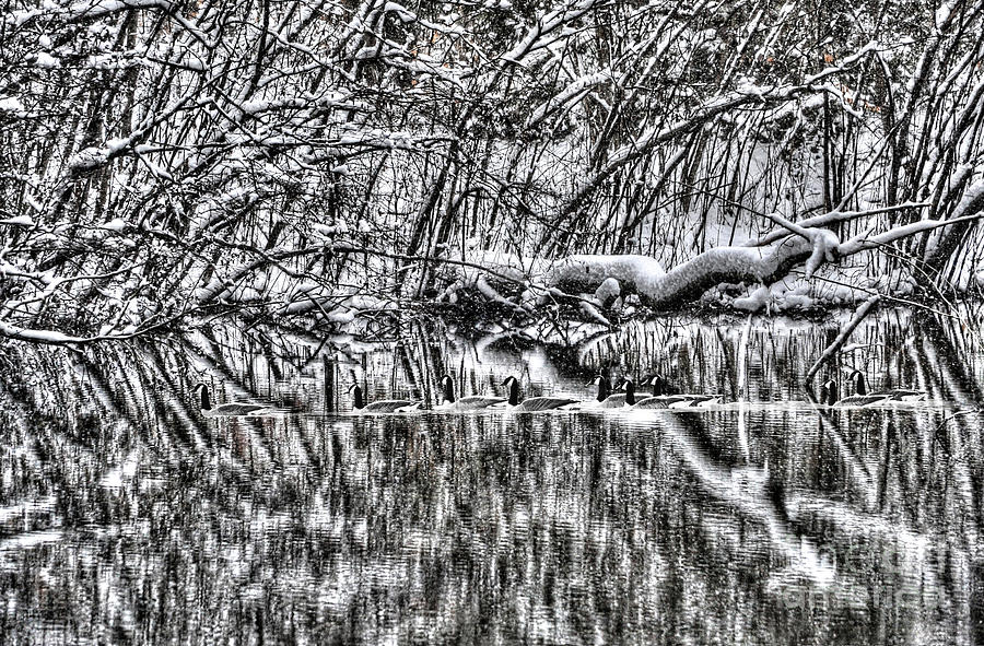 Geese Photograph - Geese On Pond Black And Wihite by Dan Friend