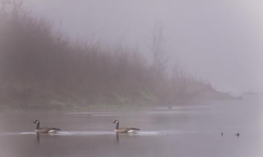 Geese On The Foggy Stanislaus by Mark Robert Bein