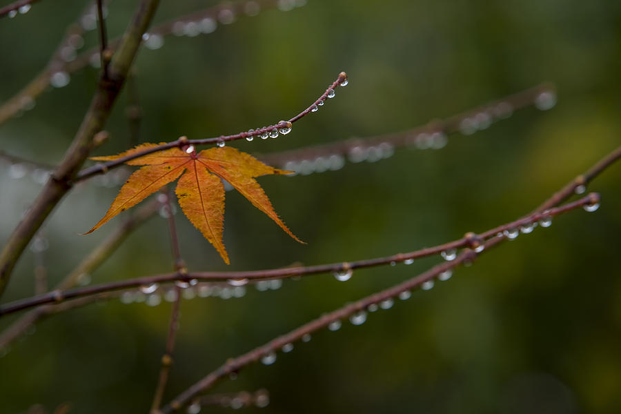 Image result for autumn rain