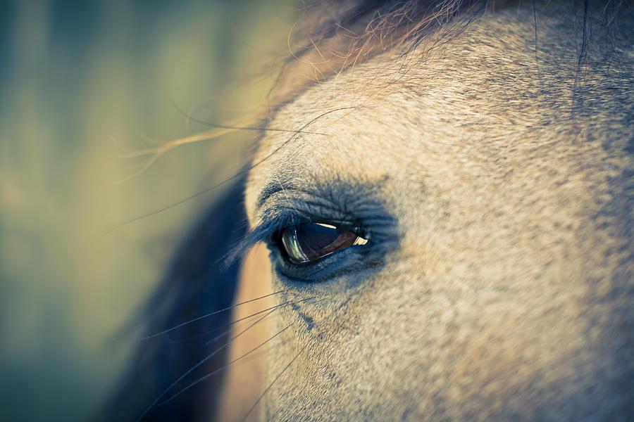 Horse Photograph - Gentle Eye by Priya Ghose