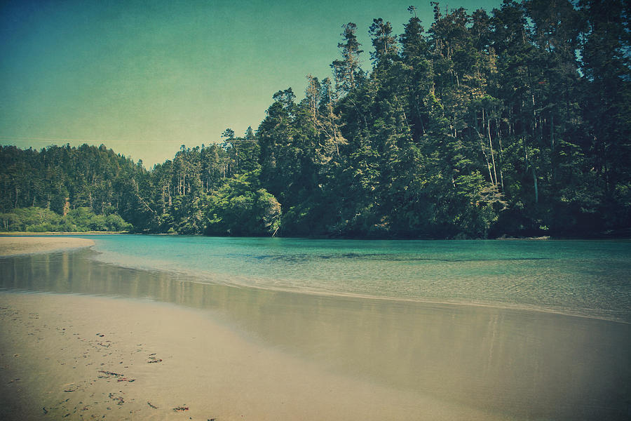 Mendocino Photograph - Gentle Musings by Laurie Search