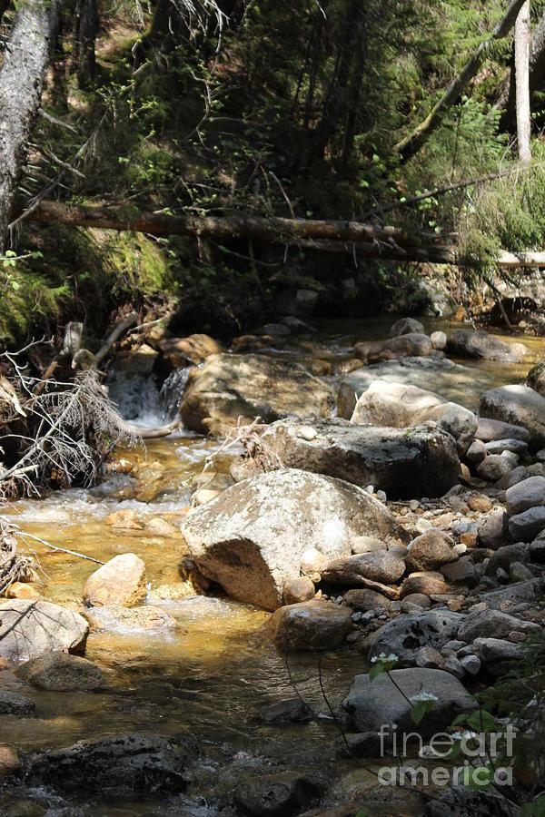 Gentle Stream On Mount Hancock Photograph