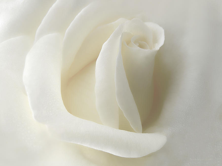 Rose Photograph - Gentle White Rose Flower by Jennie Marie Schell