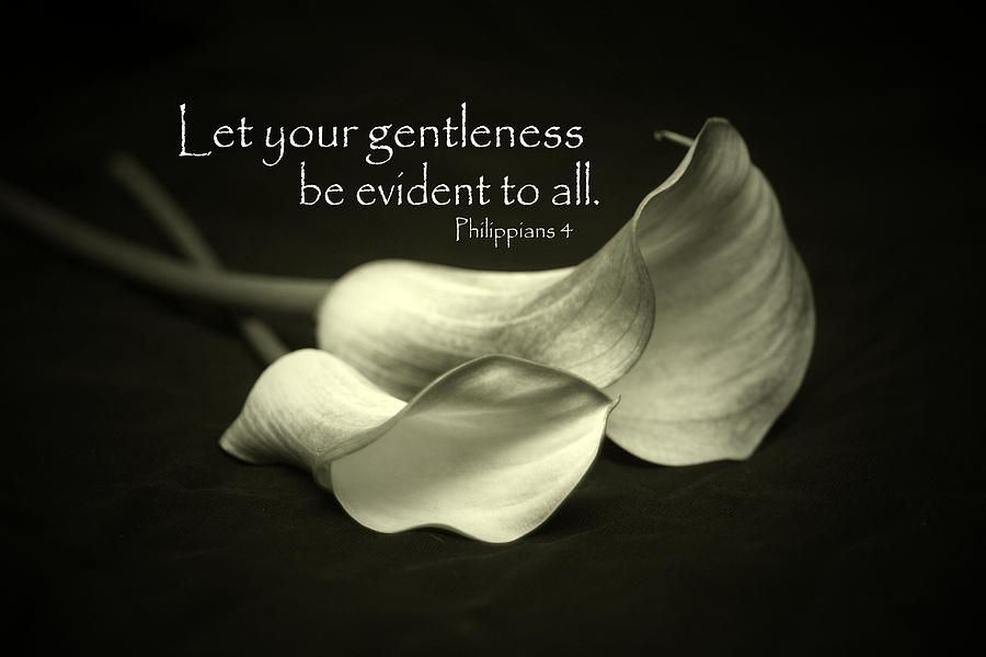 Gentleness Photograph By Linda Fowler