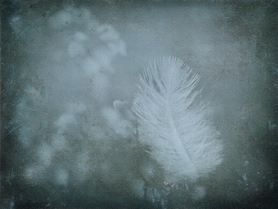 Feather Photograph - Gently by Liz  Alderdice