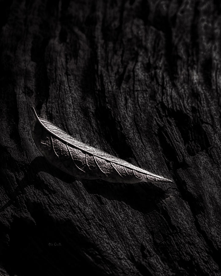 Tree Photograph - Gently Resting by Bob Orsillo