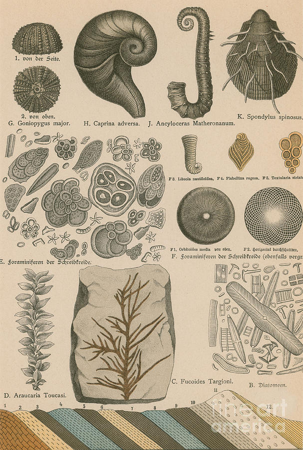Prehistory Photograph - Geology And Paleontology 1886 by Science Source