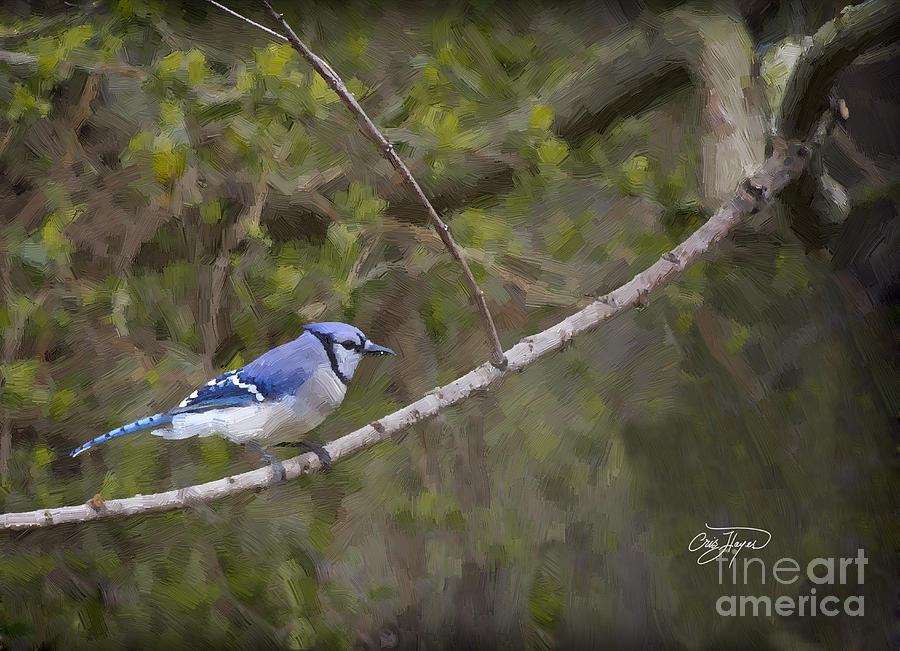 Oil Painting - Georgia Bluejay In Spring by Cris Hayes