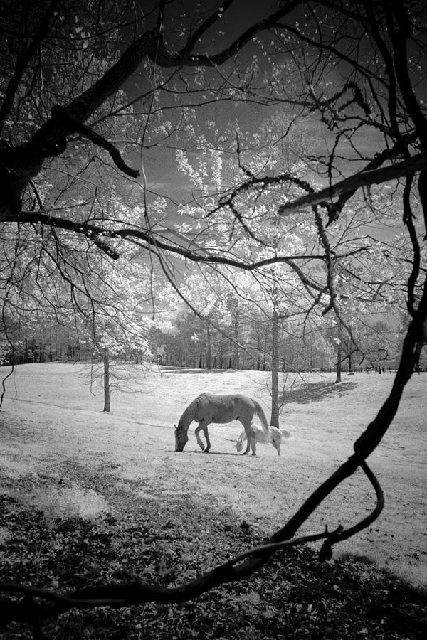 Georgia Horses by Bradley R Youngberg
