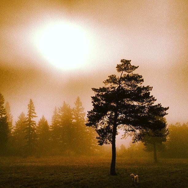 Beautiful Photograph - Morning Light by Blenda Studio
