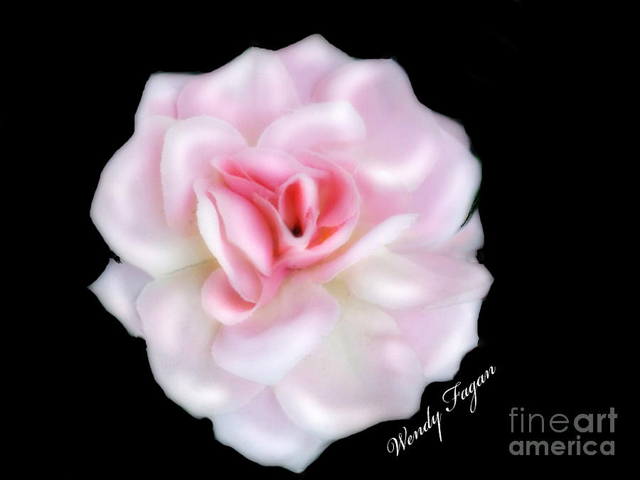 Floral Photograph - Geraldine by Jeffery Fagan