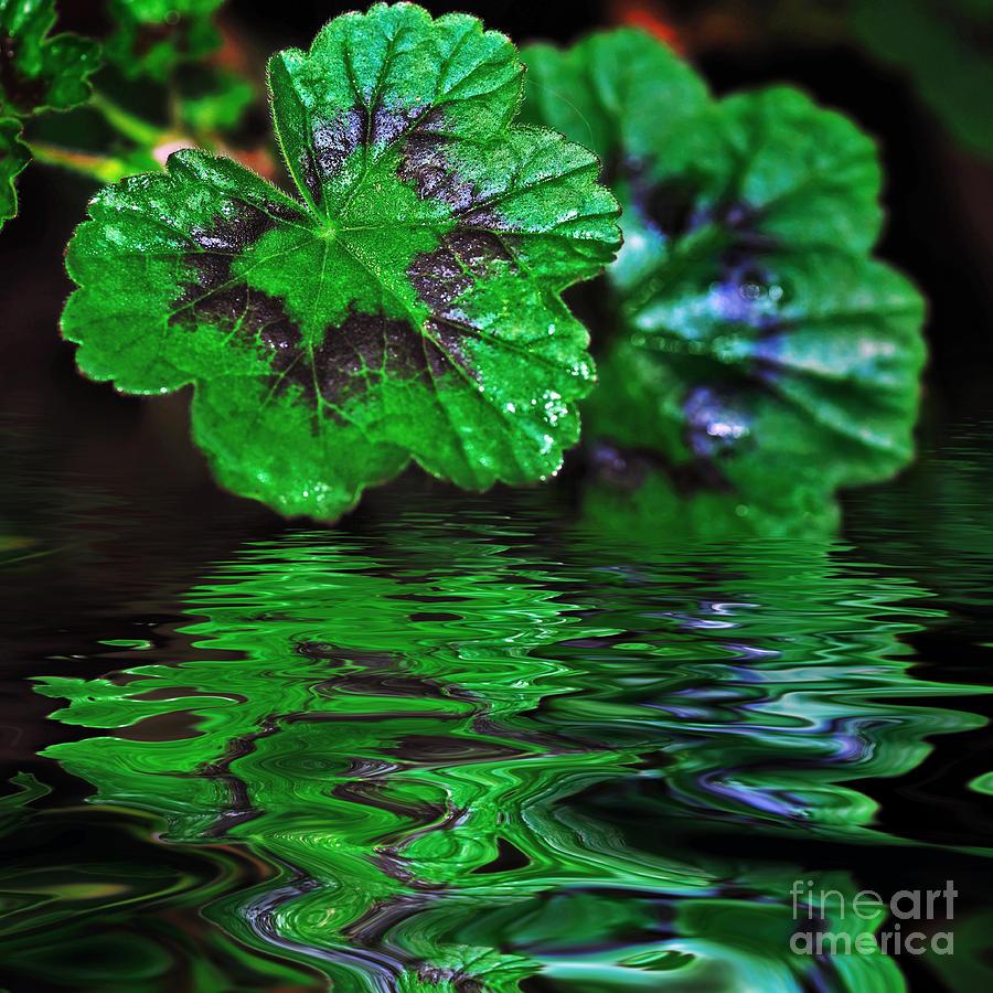 Geranium Leaves Photograph - Geranium Leaves - Reflections On Pond by Kaye Menner