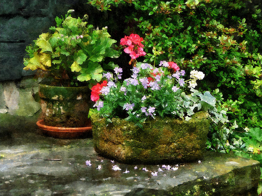 Flower Photograph - Geraniums And Lavender Flowers On Stone Steps by Susan Savad