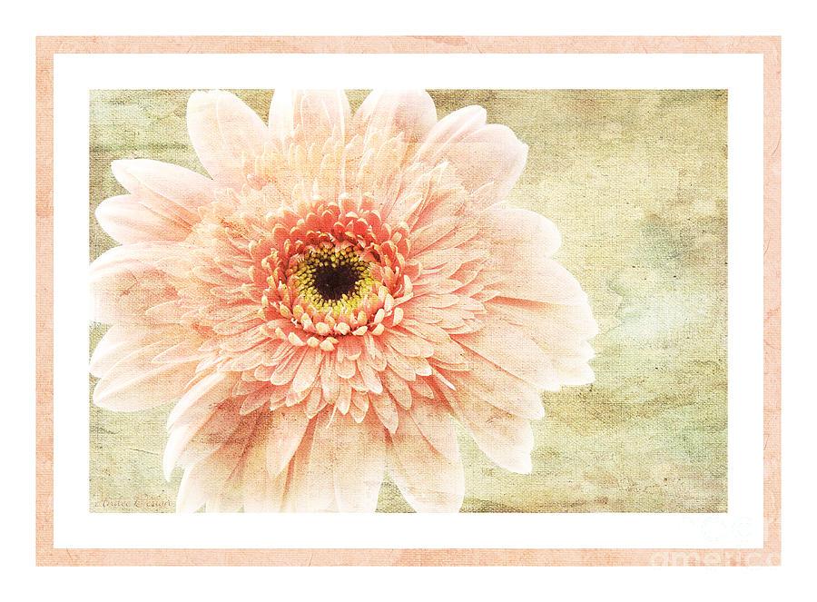 Gerber Photograph - Gerber Daisy 1 by Andee Design