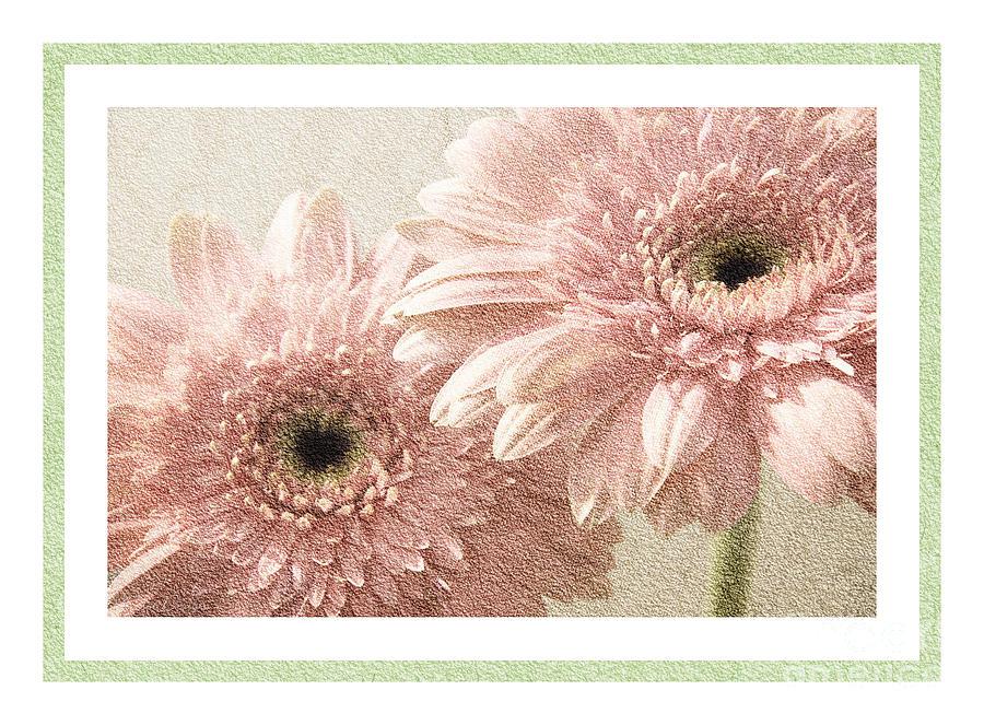 Gerber Photograph - Gerber Daisy 3 by Andee Design