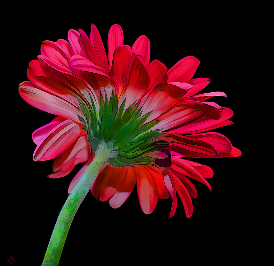 Flower Digital Art - Gerber Daisy by Hazel Billingsley