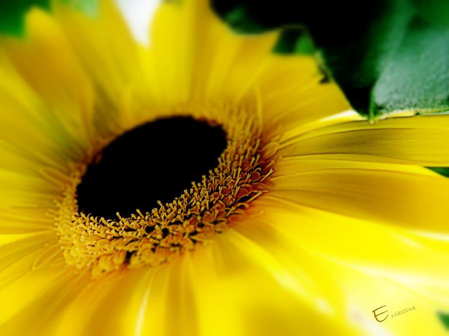 Yellow Gerbera Daisy Mixed Media - Gerbera Bed by Ernestine Manowarda