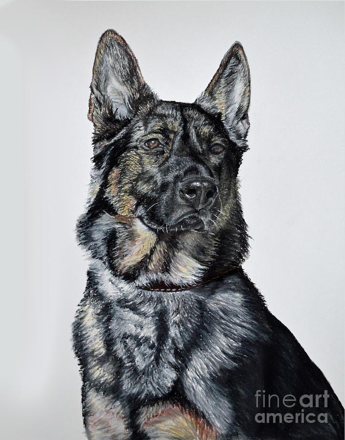 Pet Portraits Pastel - German Shepherd Bodhi by Ann Marie Chaffin