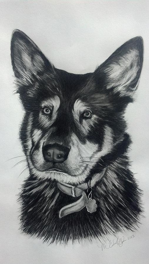 Drawing Drawing - German Shepherd/chow Mix by Michelle Harrington