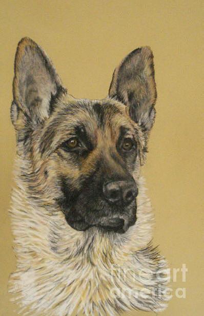 Pet Portrait Pastel - German Shepherd Deuce by Ann Marie Chaffin