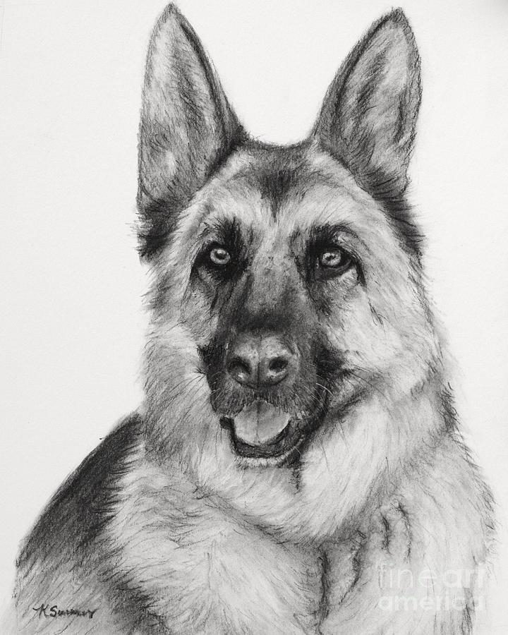 German Shepherd Drawn In Charcoal Drawing By Kate Sumners - German-shepherd-drawings
