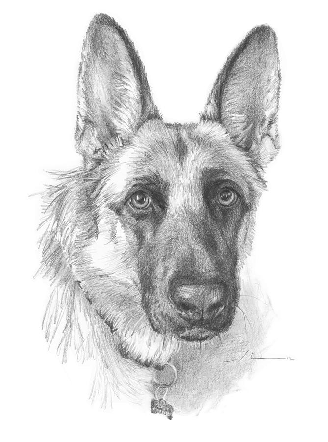 German Shepherd Face Pencil Portrait Drawing by Mike Theuer