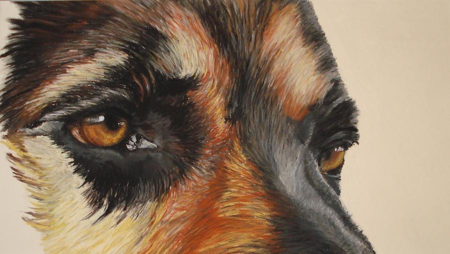 Protection Pastel - German Shepherd Gaze by Ann Marie Chaffin