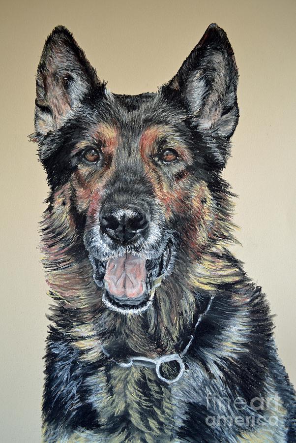 Schutzhund Pastel - German Shepherd Jim by Ann Marie Chaffin