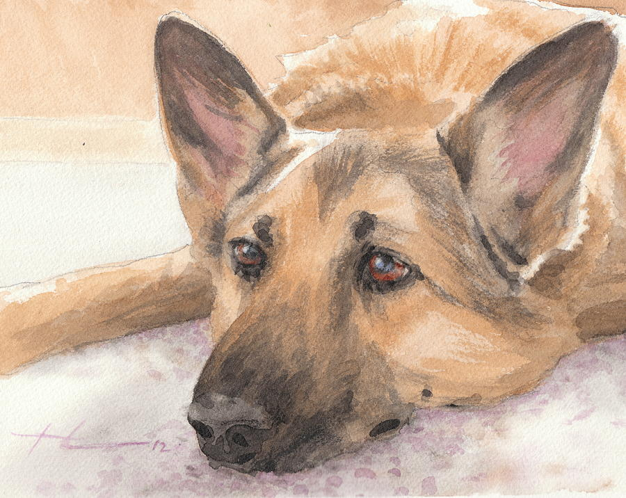 German Shepherd Laying Watercolor Portrait Drawing by Mike Theuer