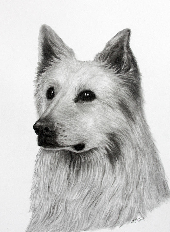 Dogs Drawing - German Shepherd by Lorraine Foster