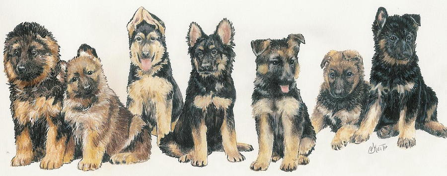 Working Breed Mixed Media - German Shepherd Puppies by Barbara Keith