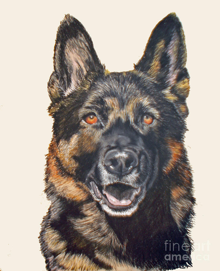 German Shepherd Dog Pastel - German Shepherd Ukon by Ann Marie Chaffin