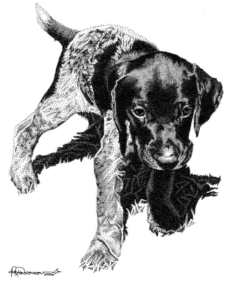 Dog Drawing - German Shorthair by Rob Christensen