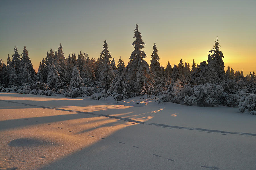 Germany, View Of Black Forest During Photograph by Westend61