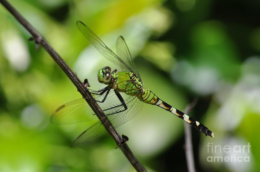 Dragon Photograph - Get In The Mood For Green by James Holloway