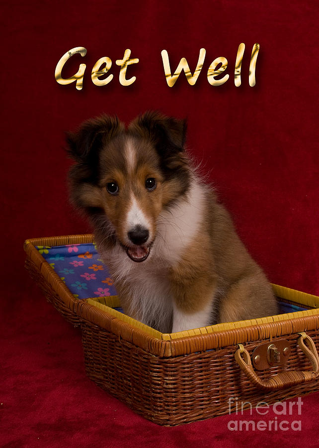 Holiday Photograph - Get Well Sheltie Puppy by Jeanette K