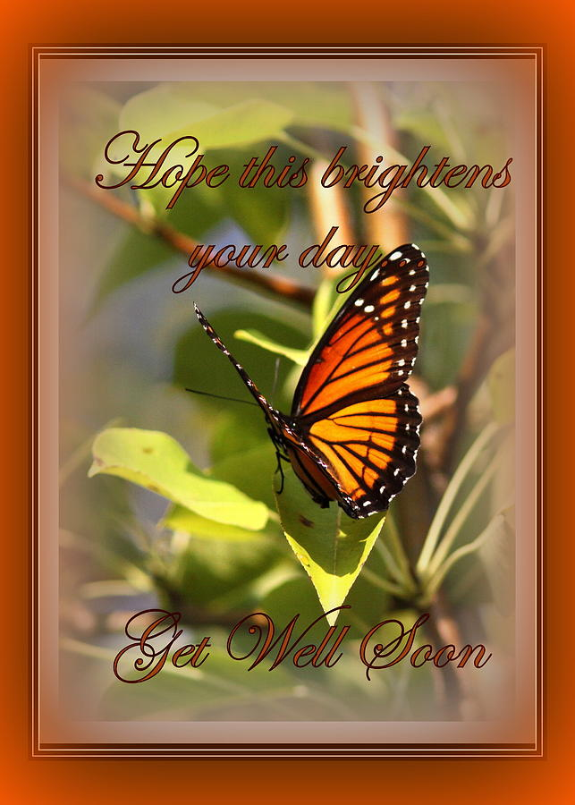 Get Well Soon Photograph - Get Well Soon - Card - Butterfly by Travis Truelove