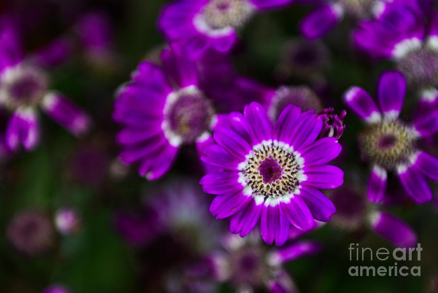 Flower Photograph - Getting Noticed by Syed Aqueel