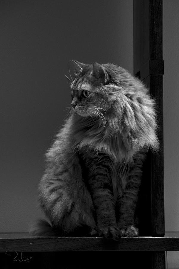 Cat Photograph - Ghiga Posing In Black And White by Raffaella Lunelli