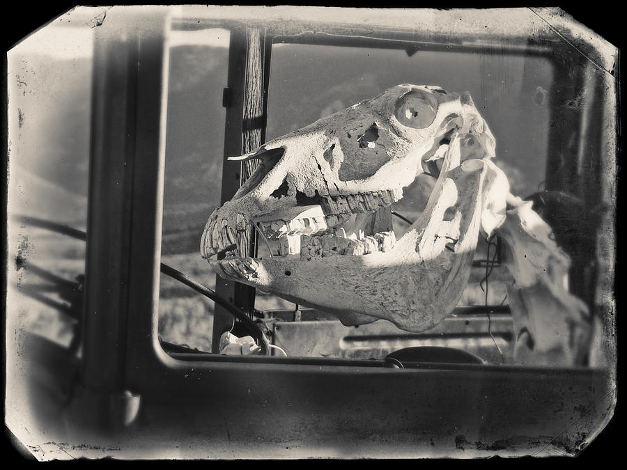 Ghost Car of Equine Death by David Bailey