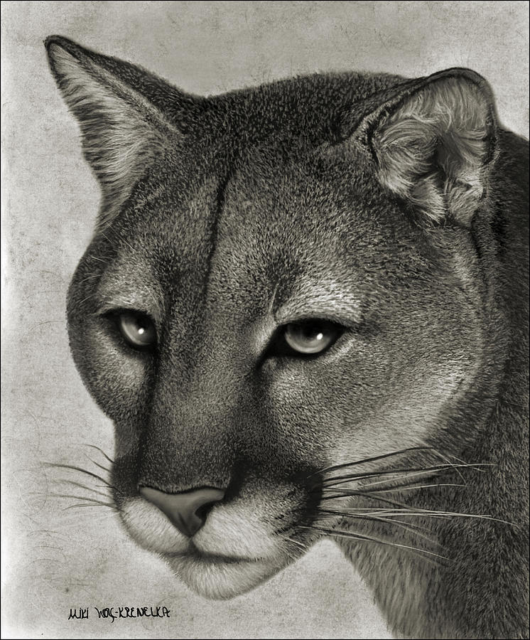 Mountain Lion Drawing - Ghost Cat by Miki Krenelka