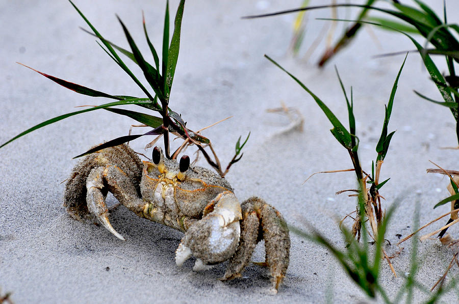 Ghost Crab by Peter DeFina