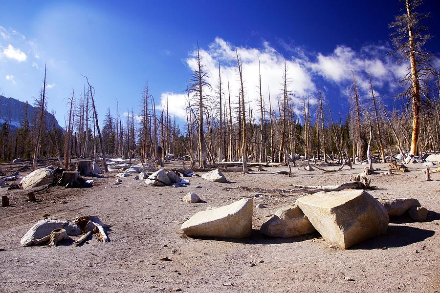 Dead Trees Photograph - Ghost Forest 3 by Michael Courtney