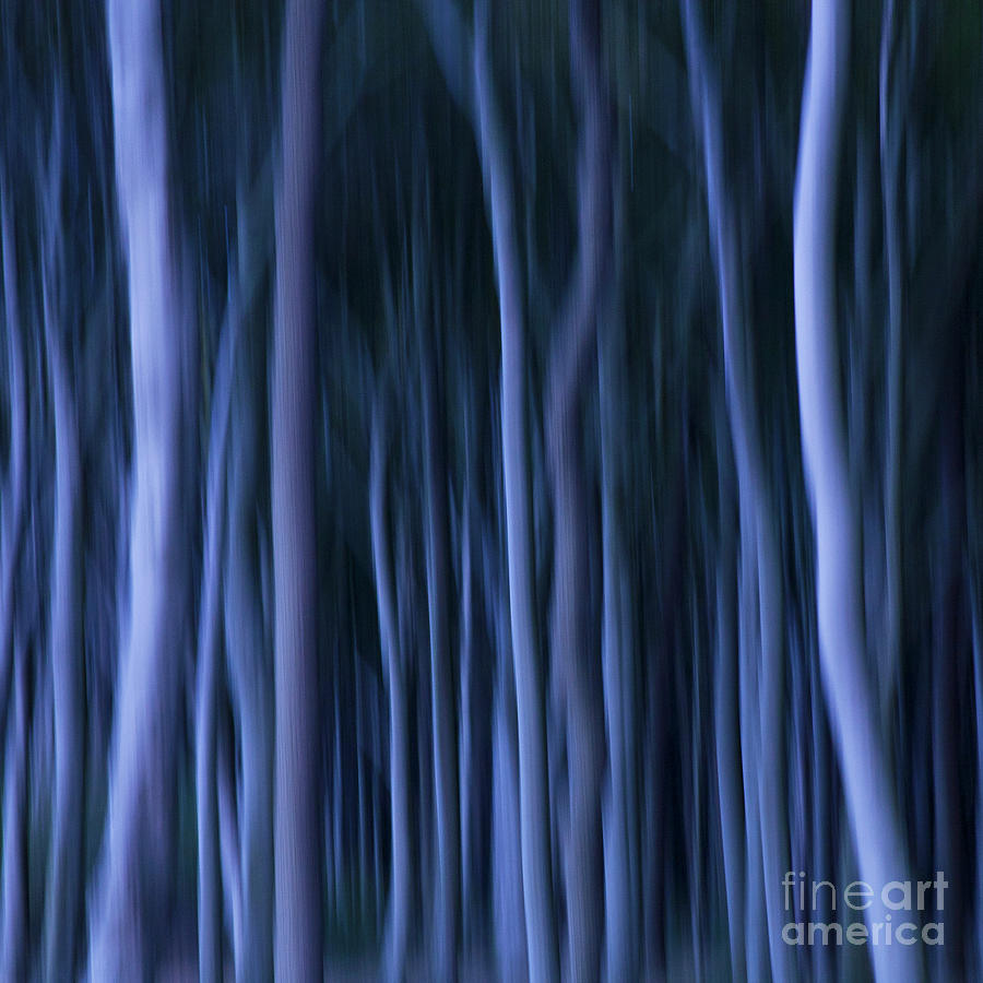 Abstract Photograph - Ghost Forest by Heiko Koehrer-Wagner