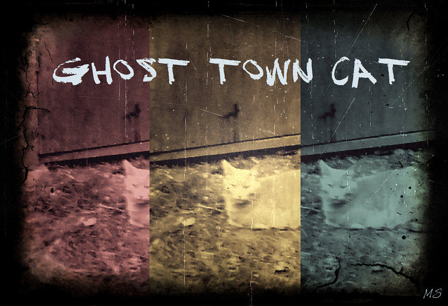 Ghost Town Photograph - Ghost Town Cat by Absinthe Art By Michelle LeAnn Scott