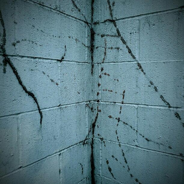 Spooky Photograph - Ghost Vines by CML Brown