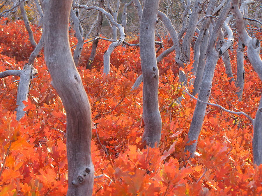 Mesa Verde; Four Corners; Mancos Photograph - Ghosts Of Seasons Past by Feva  Fotos