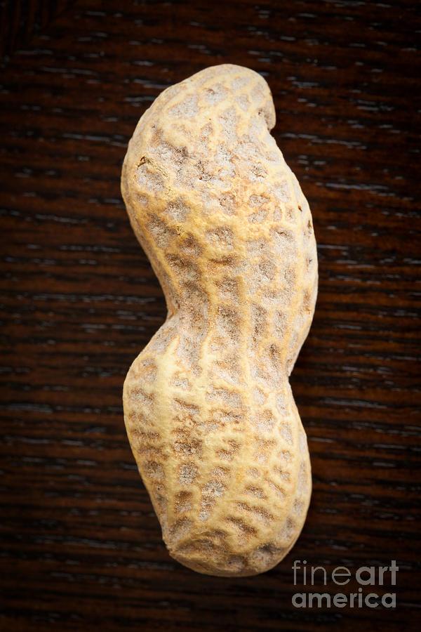 Peanut Photograph - Giant Single Peanut  by Sharon Dominick