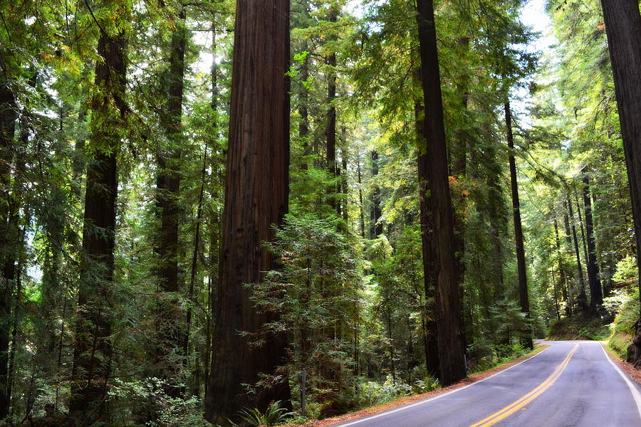 Majestic Photograph - Giants And The Road by Michelle Calkins